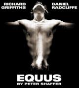 <h5>Equus</h5><p></p>