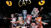 <h5>Cats</h5><p></p>